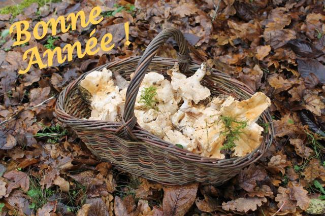 Panier a champignons anim osier