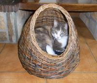 Panier de repos pour chat